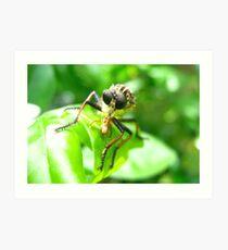 Bug Eat Bug Art Print