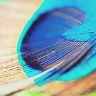 Peacock feather III by Sara Hazeldine