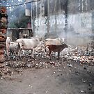 garbage disposal - India by picketty