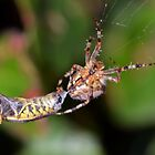 Spider vs Wasp by Chris Monks