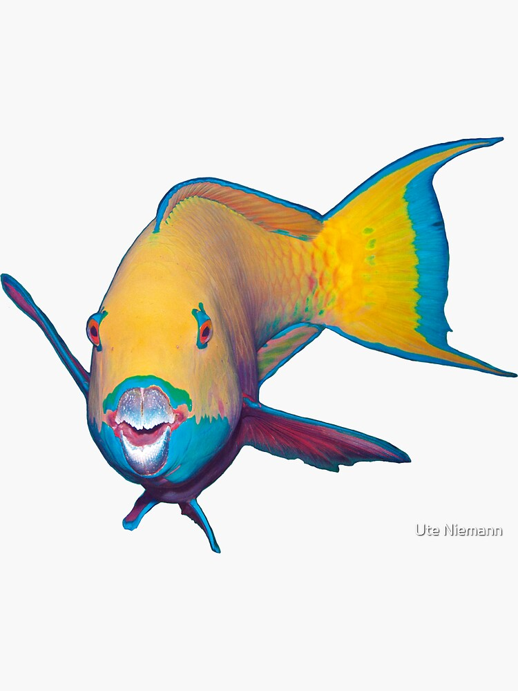 Parrotfish | What a striking make-up! |  by Ute-Niemann
