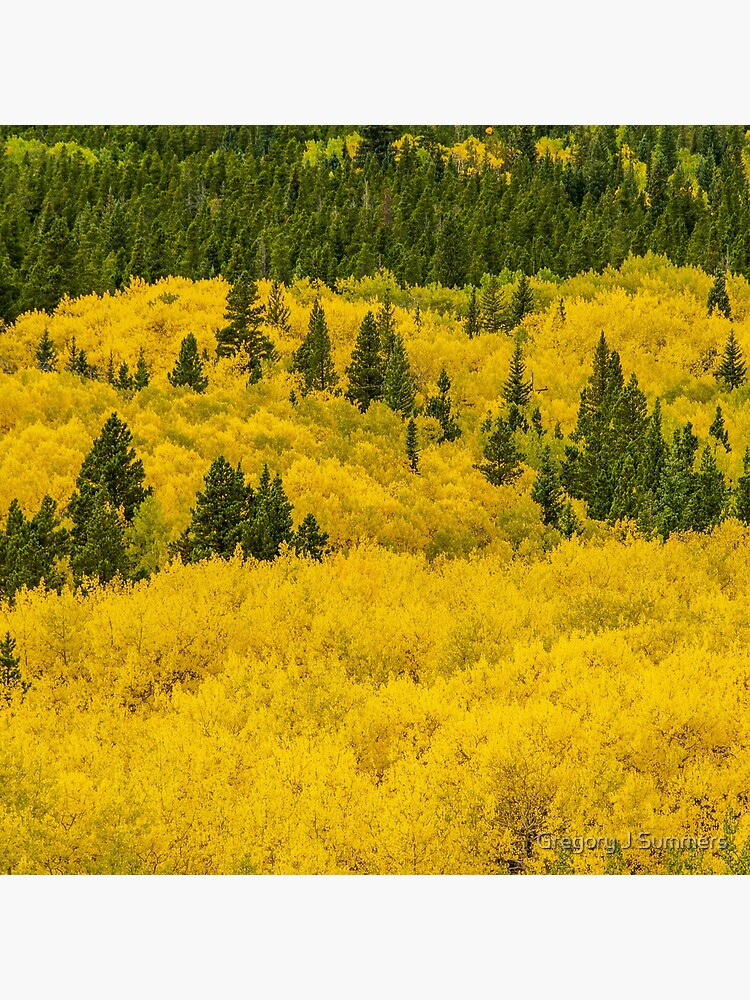 Colorado Gold by nikongreg