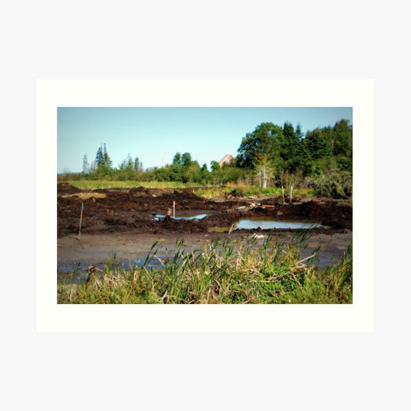Oak Island swamp Art Print