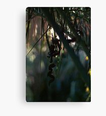 little thing Canvas Print