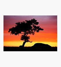The Tree at Dog Rocks Geelong Victoria Photographic Print