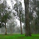 Fog by tabusoro