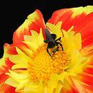 Bee by tabusoro