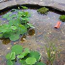 Round pond by AmandaWitt