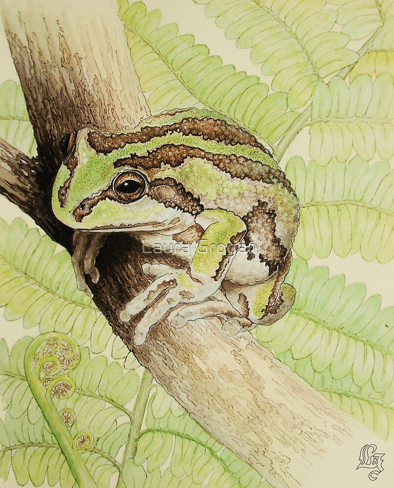 Alpine Tree Frog (Litoria verreauxii alpina) by Laura Grogan
