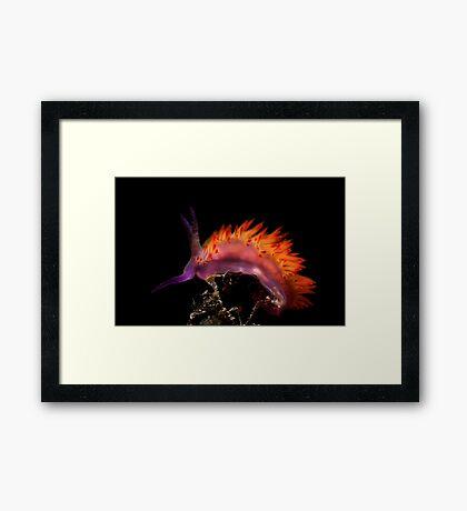 Flaming Tongue Framed Print