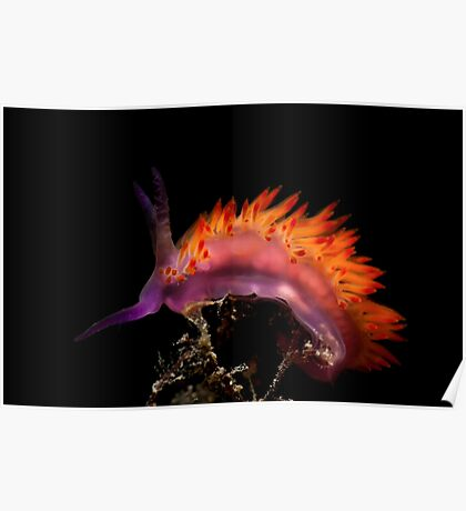 Flaming Tongue Poster