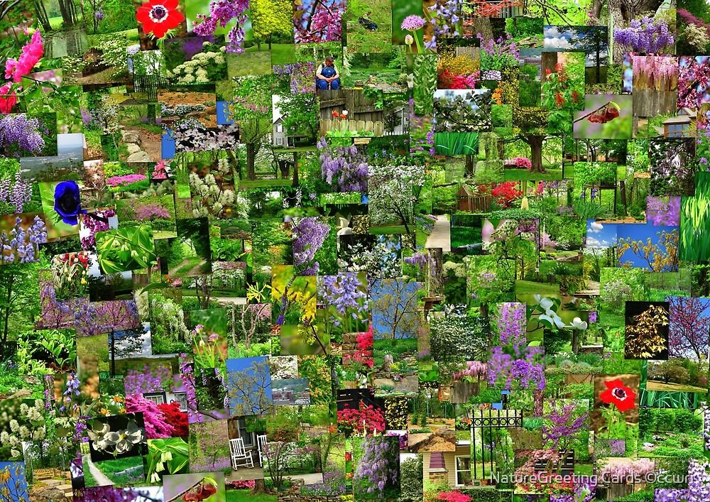 Spring Serenade by NatureGreeting Cards ©ccwri