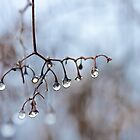 Raindrop Chandelier by Marilyn Cornwell