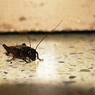 Cricket by Akash Puthraya