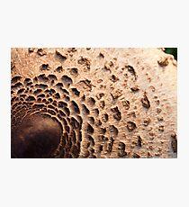 Mushroom Cap Photographic Print