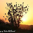 the sunset behind tree by Fatima ALShamsi