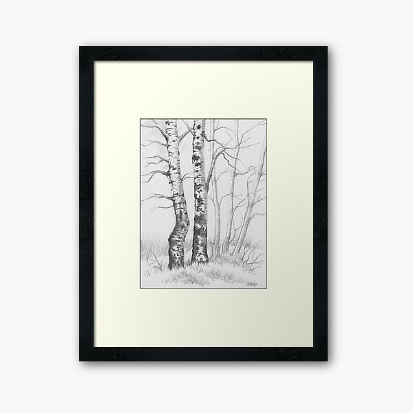 BIRCH TREE 01 Framed Art Print