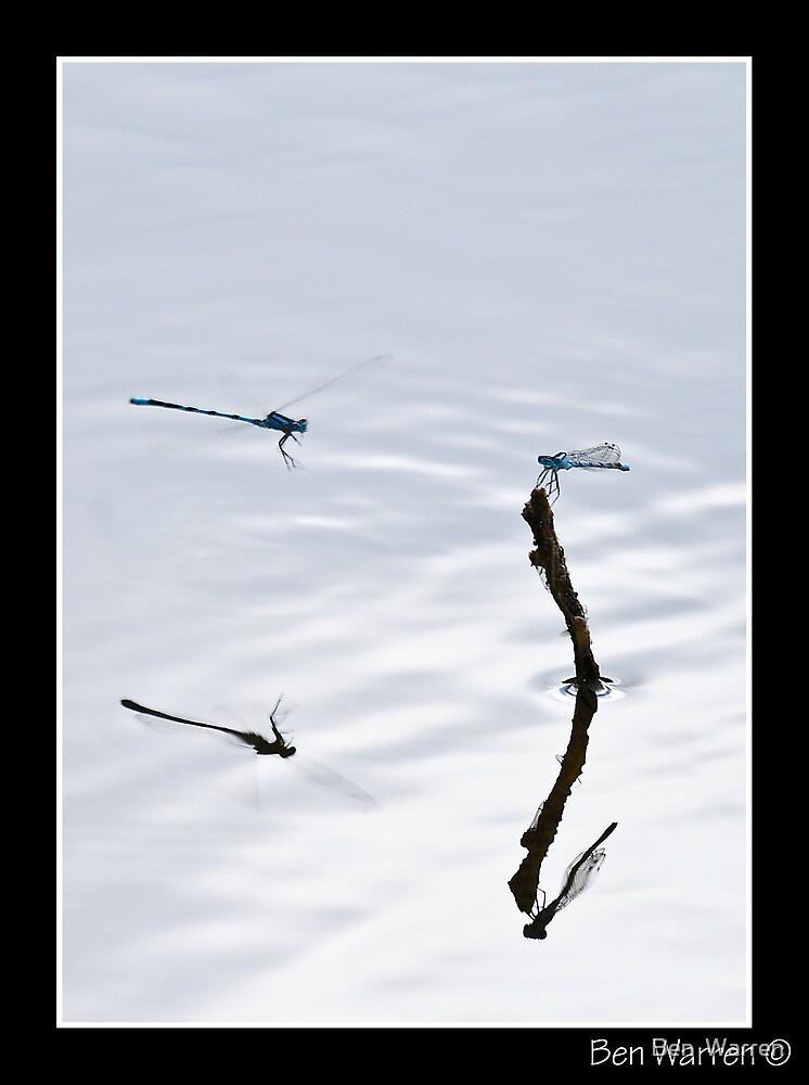 Damsel reflection by Ben  Warren