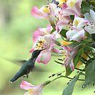 The Hummingbird by Gemma June