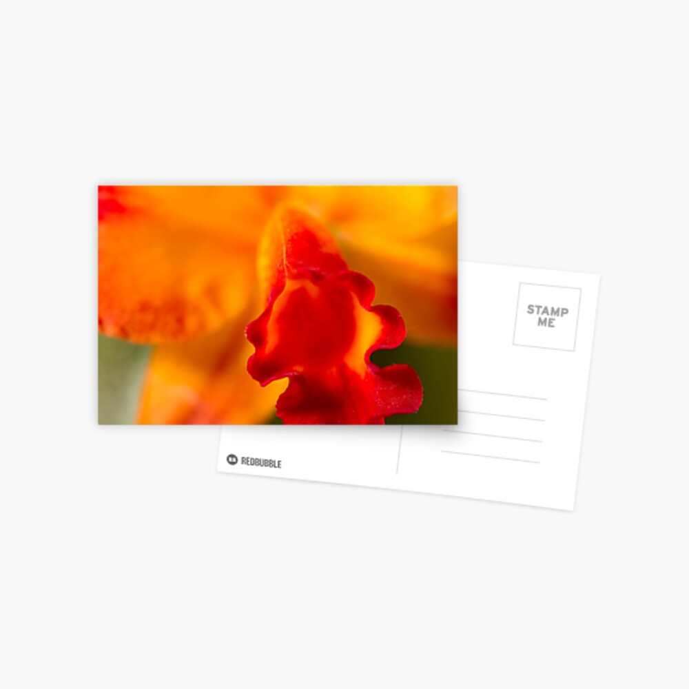 Orange Sunshine Postcard