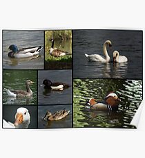 Wildfowl Collage Poster