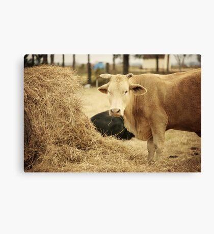 Supper Time Canvas Print