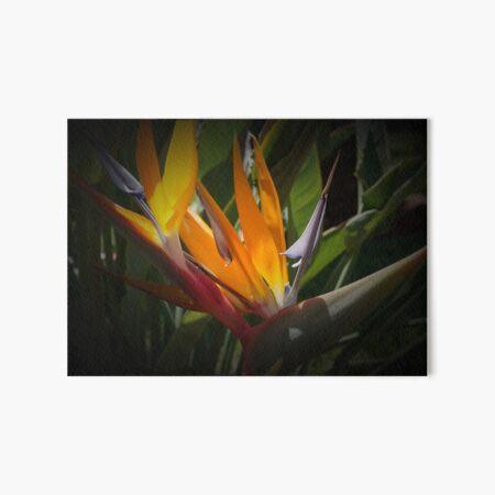 Paradiesvogelblume Galeriedruck