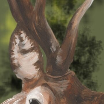 Stag Portrait Banner by ImogenSmid