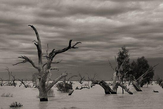 Menindee Trees by Heath Carney