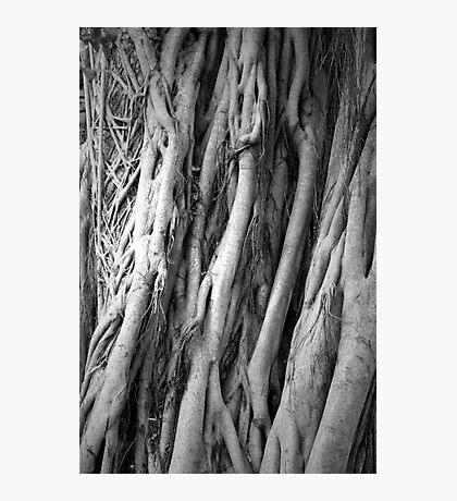 Sarasota Tree Photographic Print