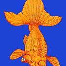 Goldfish by Kawka