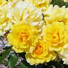 A Yellow Rose, The Color Of Friendship by elsha