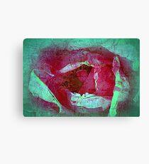 Texture Pink Rose Canvas Print