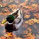 Floating On Leaves by LukeEverett