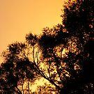 Orange Sunset by minikin