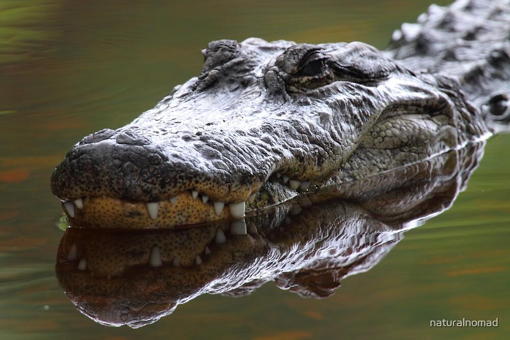Alligator Grin by naturalnomad