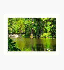 The Lake at Magnolia Plantation Art Print