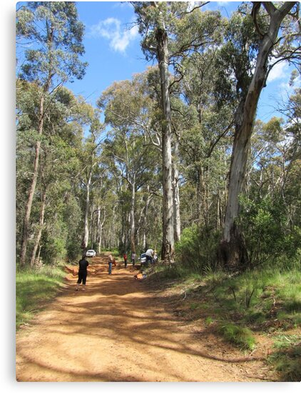The Road To Mt Coree near Canberra - Australia. by shortshooter-Al