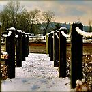 snow on the fence by Emily Anne Schwartz