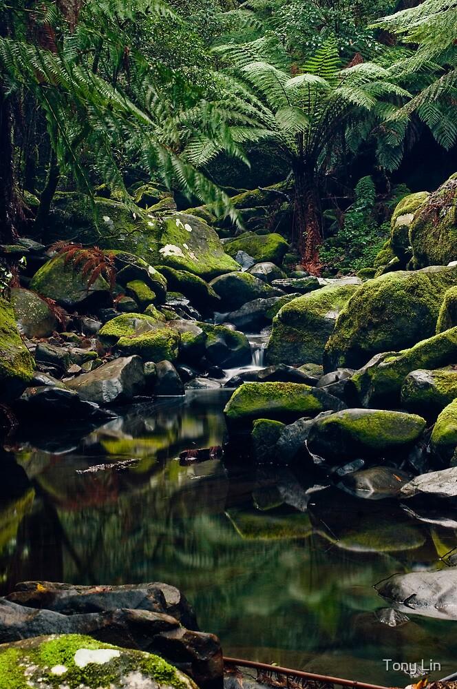 Cascades Downstream Erskine Falls by Tony Lin