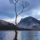 Lone Tree Buttermere, Lake District by Chris McIlreavy