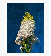 White Foxglove flowers on texture Photographic Print