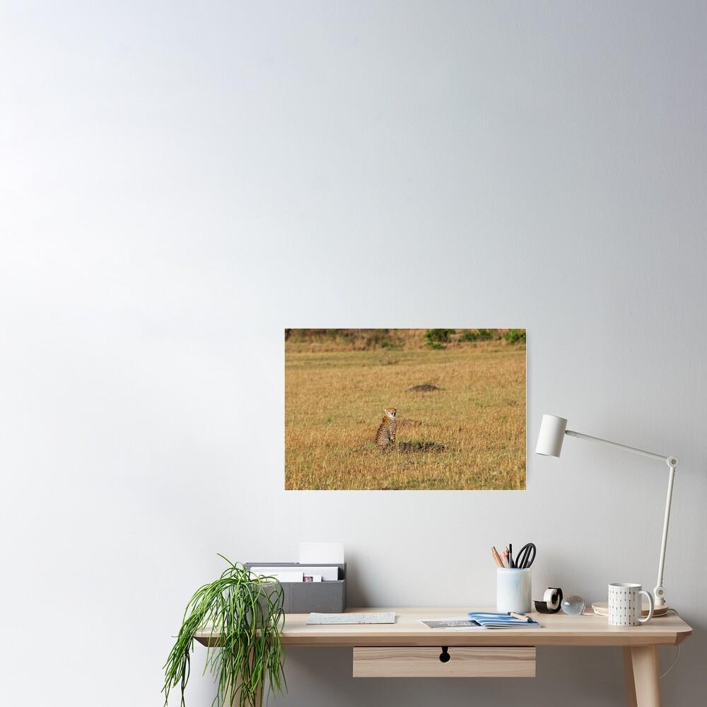 Sunset Cheetah Poster