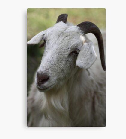 A Goat Portrait Canvas Print