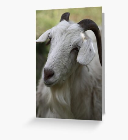 A Goat Portrait Greeting Card