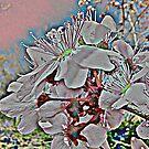 Kirschblüten von rhnaturestyles