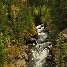 Rocky Mountain Autumn Stream Portrait  by Bo Insogna