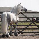 The Fell Pony - by Fleur Hallam Photography by Fleur Hallam