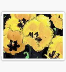 An Albany Tulip - 2003 Sticker