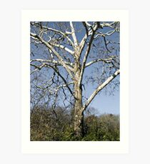 Leafless Tree Art Print